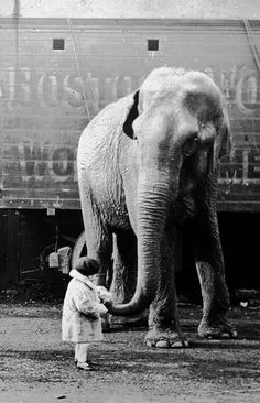 Circus elephant and toddler, 1930's