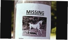 15 Most Hilarious 'Lost Pet' Signs