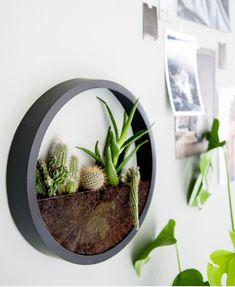 Relógio de plantas – Bem Legaus
