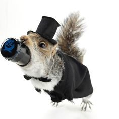 This Dead Squirrel Filled with 55% Alcohol Beer Only Costs $20K
