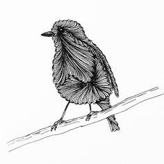 Daily drawing 183   #zentangle #zenart #zen #zentangleart #ink #inkdrawing #dailydrawing #drawing #birds #birdstagram #ilovebirds http://ift.tt/2nLYy7w Daily drawing 183  zentangle zenart zen zentangleart ink inkdrawing dailydrawing drawing t