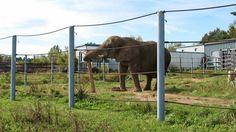 QC - Hemmingford - Parc Safari - 3 of 25 - Safari Aventure - Elephants