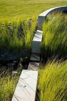 nice bioretention planter design tips landscape architecture Contemporary Landscape, Urban Landscape, Landscape Design, Garden Design, Plant Design, Rain Garden, Water Garden, Gros Morne, Landscape Architecture Drawing