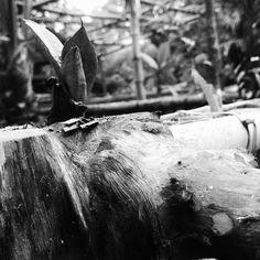 Succulent #blackandwhite #driftwood by raymondbonita
