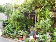 青山通りから一本入った路地にひょっこりあるまるで植物園のようなカフェ。外観の緑の多さに圧倒されます!