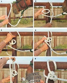 web web - Art Of Equitation Horse Riding Tips, Horse Tips, Horseback Riding Lessons, Horse Facts, Horse Halters, Horse Supplies, Horse Grooming, Horse Stables, Horse Care