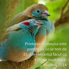 Ps.25:14