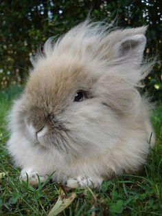 coniglio dal pelo lungo e morbido!