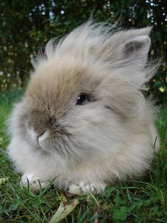 FLUFFY! Looks like Bella!!