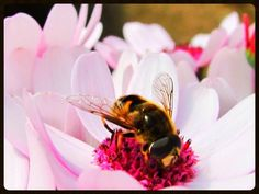 Share your photos and win prizes Win Prizes, Your Photos, Bee, Plants, Animals, Animales, Animaux, Bees, Flora