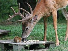 Cute Animals - Squirrel and Deer Nature Animals, Animals And Pets, Baby Animals, Funny Animals, Cute Animals, Amor Animal, Mundo Animal, Beautiful Creatures, Animals Beautiful