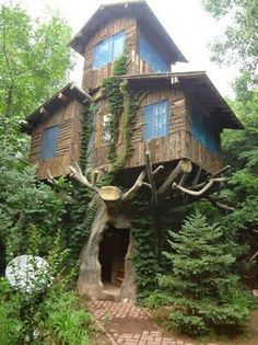 Best Of Crooked Tree Houses