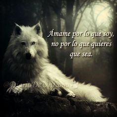 Si no es mucho pedir… #DiarioDeUnLobo #Quotes #Frase #Quote #Frases #Wolf #Lobo #Wolves #Lobos #iFrase #Follow #Like #Love #Amor #Sentimiento #Feelings #Sentimiento