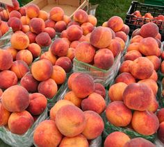 Peddler's Village To Host Its First Annual Peach Festival, August 11-12, With Peach Treats, Pie Eating Contests, Sidewalk Sales And More: http://www.uwishunu.com/2012/08/peddlers-village-to-host-its-first-annual-peach-festival-august-11-12-with-peach-treats-pie-eating-contests-sidewalk-sales-and-more/