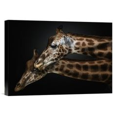 "Global Gallery 'We Will Survive' by Pedro Jarque Photographic Print on Wrapped Canvas Size: 26"" H x 36"" W x 1.5"" D"