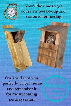 Owl Box, Birdhouse Designs, Owl Family, Bird Houses Diy, Diy Bird Feeder, Beautiful Owl, Owl House, Backyard Birds, Wood Crafts