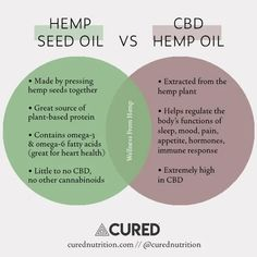 Hemp Seed Oil vs CBD Hemp Oil [Side by side comparison] Medical Benefits Of Cannabis, Medical Marijuana, Hemp Recipe, Cannabis Edibles, Cbd Hemp Oil, Oil Benefits, Hemp Seeds, Seed Oil, Nutrition