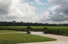 Château Le Menaudat Bordeaux, Golf Courses, Stone Driveway, Wine Vineyards, Environment, Bordeaux Wine