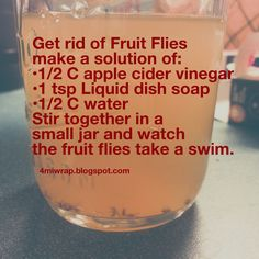 Get rid of those pesky Fruit Flies/Gnats with this easy solution.