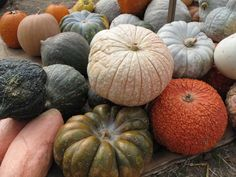 Google Image Result for http://images.fineartamerica.com/images-medium/pumpkins-and-gourds-barbara-mcdevitt.jpg