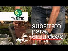 Como preparar o substrato ideal para orquídeas?   TV Sítio