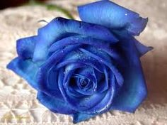 Is this a blue rose? Whatever it is, it's pretty.