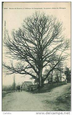 Le Grand Chêne du Ninigou
