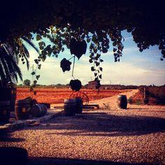 José's L. Ferrer vineyards in Binissalem #Mallorca #Majorca #Mallorcagram