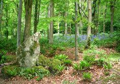 Woods at Old Wardour Castle