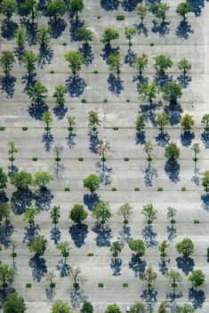 The variety and placement of trees forms a visual work of art when viewed from above.