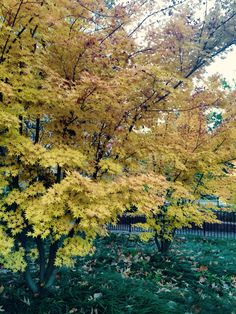 Fall colors are finally here Lina LeGare