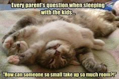 Happy #Caturday everyone...time for a cheeky sleep in with the kids? Cat Editor Cats Adopt a Cat-titude