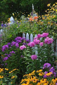 Phlox paniculata, Laura and pink colored Phlox paniculata, Eva Cullum Beautiful Flowers, Garden Inspiration, Plants, Beautiful Gardens, Planting Flowers, Flower Garden, Outdoor Gardens, Beautiful Flowers Garden, Cottage Garden
