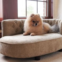 My dog is NOT spoiled... b/c she doesnt have this chaise!