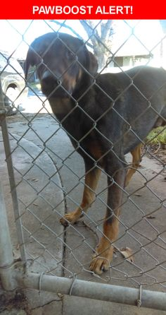Is this your lost pet? Found in Sacramento, CA 95824. Please spread the word so we can find the owner!