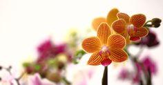 Tangerine Blooms