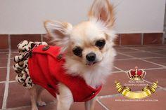 ropa perros, moda canina
