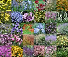 Dutch Gardens, Backyard Plan, Cut Flower Garden, Cottage Garden Plants, Garden Borders, Colorful Garden, Plantation, Edible Garden, Landscaping