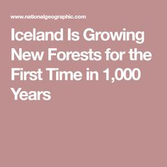 Iceland Is Growing New Forests for the First Time in 1,000 Years
