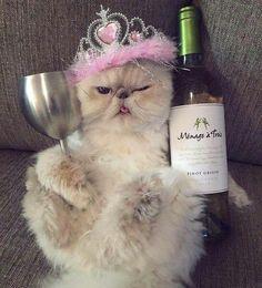 Best 26 Cat Birthday Meme Beste 26 Katze Geburtstag Meme & 10 So peachy The post Best 26 Cat Birthday Meme & Happy Birthday appeared first on Happy birthday . Cat Birthday Memes, Funny Happy Birthday Wishes, Birthday Greetings, Funny Birthday, 21st Birthday, Funny Happy Birthday Pictures, Birthday Images, Instagram, Happy Memes