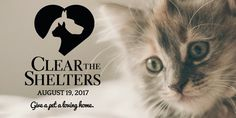 As of 8 p. EST I've only heard back from one shelter on the success of today's Clear the Shelters event. Columbus County Animal Control in Whiteville, North Carolina shattered their record from 2016 by Nine Cat, Boys Home, Honor Society, Animal Control, Work Today, New Parents, New Friends, Dog Cat, Adoption