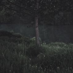 The Death Eaters: Dark wood Blue Sargent, Deep Forest, Foto Art, Summer Aesthetic, Dark Places, Dark Beauty, Woodland, Nature Photography, Beautiful Places