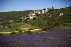 The Provence region of France is renowned for its rolling hills and fields of fragrant lavender. Our Simiane-la-Rotonde farm is the only American-owned lavender farm in France. Young Living takes advantage of this fertile land to grow clary sage, lavender, rosemary, and lavandin.