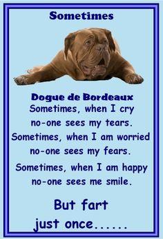 This is my bordeaux!!!  Dogue de Bordeaux- NEW - Slap-on Magnets Set of 9 dog magnets - FREE UK pp | eBay