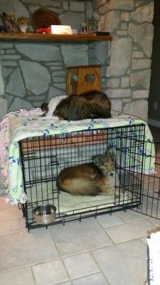 Sheltie Bunk Beds
