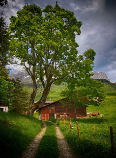 Switzerland - typical country farm scene with cows wearing bells. Country Barns, Country Life, Country Roads, Country Living, Barns Sheds, Winterthur, Country Scenes, Red Barns, Old Farm