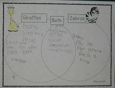 Zoo Part 2