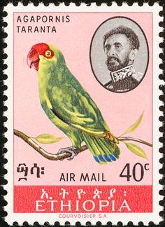 Etiopía 1967 - El Inseparable Abisinio,nativo de Eritrea y Etiopía. Están entre los inseparables más grandes y resistentes.
