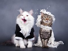 Nice to see this cat bride and groom kicking back and having fun on their special day.