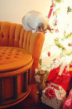 """* * CAT ON CHAIR: """" Hey kid, didz de humans leave? """" KITTEN: """" Sure didz. Nowz weez kin starts unwrappin' de presents."""""""